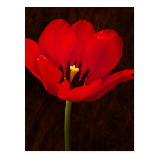 Red Tulip Flower Colourful Floral Stem Postcard