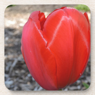 Red Tulip Flower Coaster