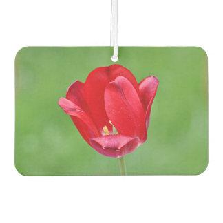 Red tulip flowers