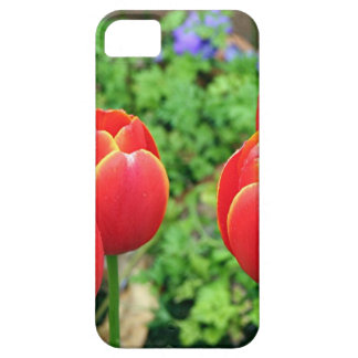 Red tulip flowers in bloom 1 iPhone 5 cover