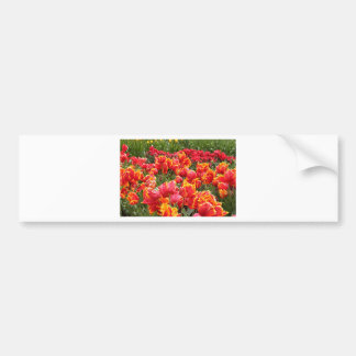 Red tulip flowers in bloom 2 bumper sticker