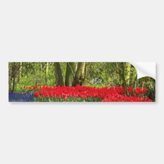Red Tulip glade, Holland flowers Bumper Sticker