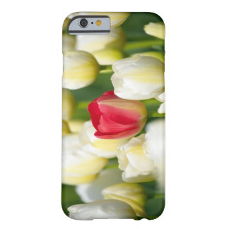 Red tulip in a field of white tulips barely there iPhone 6 case