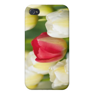 Red tulip in a field of white tulips case for iPhone 4