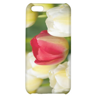 Red tulip in a field of white tulips cover for iPhone 5C