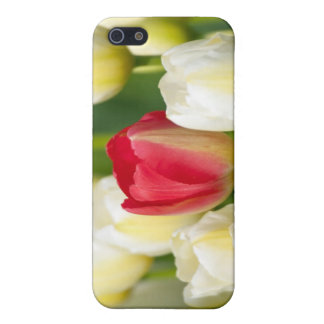 Red tulip in a field of white tulips iPhone 5 case