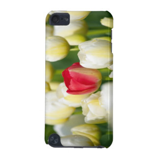 Red tulip in a field of white tulips iPod touch 5G cover