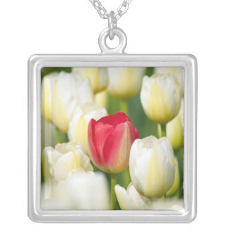 Red tulip in a field of white tulips square pendant necklace