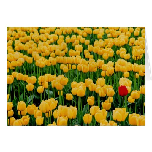 Red Tulip in a Yellow Tulip Field Greeting Cards