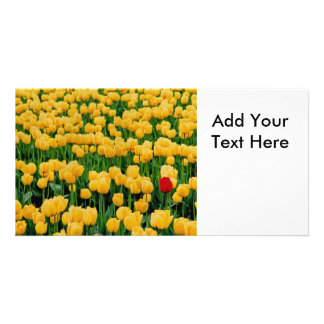 Red Tulip in a Yellow Tulip Field Photo Cards