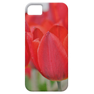 Red tulip iPhone 5 case