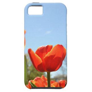 Red Tulip - iPhone 5 case