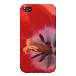 Red tulip iPhone 4/4S case