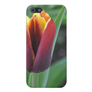 Red Tulip iPhone Speck Case iPhone 5 Case
