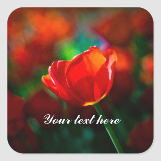 Red tulip - Mystery of blooming Square Sticker