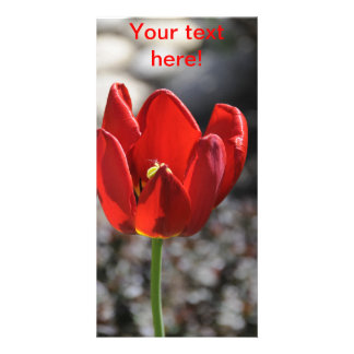 Red tulip photo card template