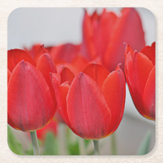 Red tulip photo coaster square paper coaster