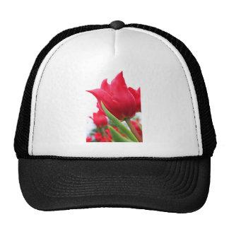 Red Tulip Photo Mesh Hats