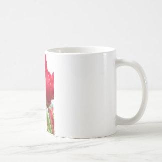 Red Tulip Photo Mugs
