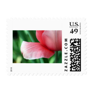 Red Tulip stamp
