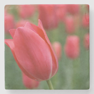 Red Tulip Stone Coaster