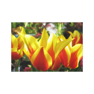 Red Tulip Wrapped Canvas