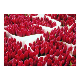 Red Tulips Amsterdam Netherlands flowers Invite