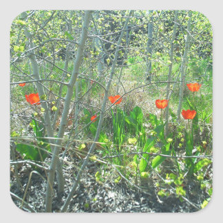 Red Tulips Aspen Trees Square Sticker