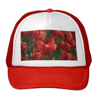 Red Tulips Cap