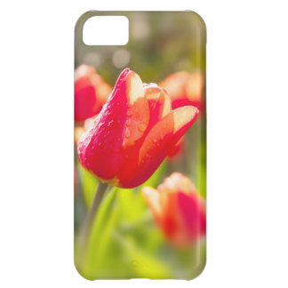 Red Tulips Cover For iPhone 5C