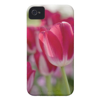 Red Tulips iPhone 4 Covers