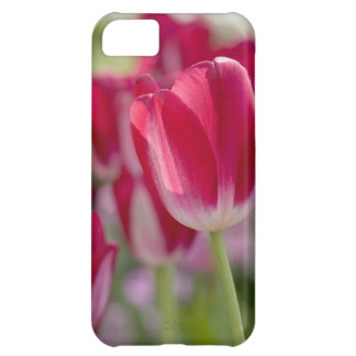 Red Tulips iPhone 5C Covers