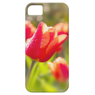 Red Tulips iPhone 5 Cover