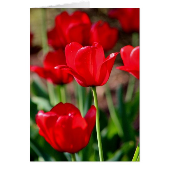Red Tulips Customisable Card
