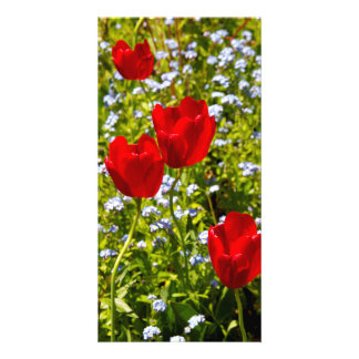 Red Tulips Customised Photo Card