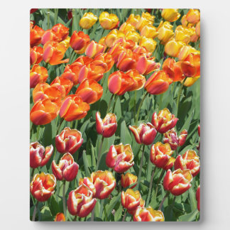 Red tulips display plaques