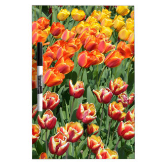 Red tulips dry erase board