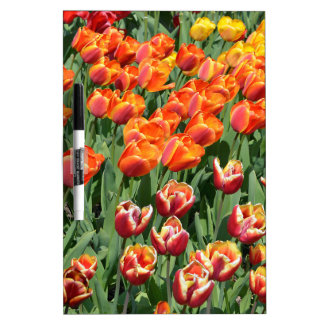 Red tulips dry erase boards