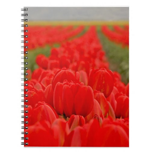 Red Tulips Field Photo Note Books