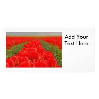 Red Tulips Field Photo Photo Greeting Card