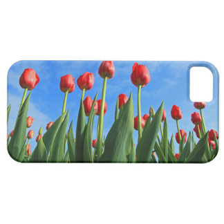 Red tulips flowers beautiful iphone 5 case mate