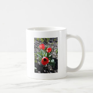 Red tulips from Paso Robles City Park Coffee Mugs