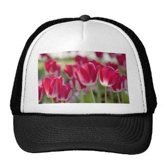 Red Tulips Trucker Hat