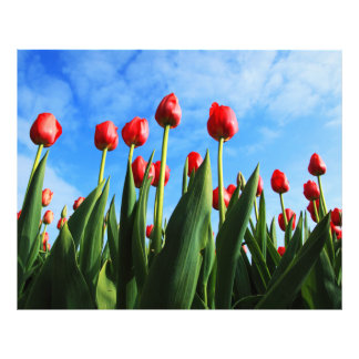 Red Tulips in the Sun Art Photo