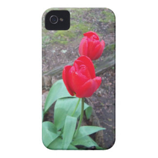 Red Tulips IPhone 4/S Barely There Skin Case-Mate iPhone 4 Case