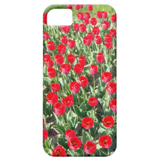 Red Tulips iPhone 5 Covers