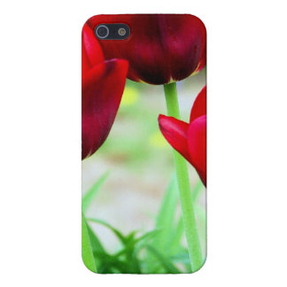Red Tulips Case For iPhone 5/5S