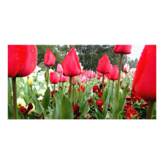 Red Tulips Looking Up Personalized Photo Card