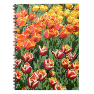 Red tulips notebooks