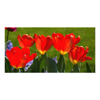Red Tulips Photo Greeting Card